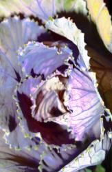 Juliet Cook, Dark Purple Intersections